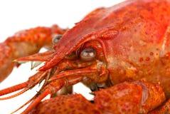 Crayfish head closeup Royalty Free Stock Images