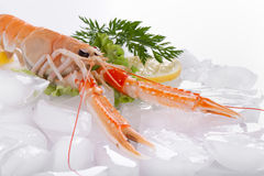 Crayfish on ice Royalty Free Stock Photography