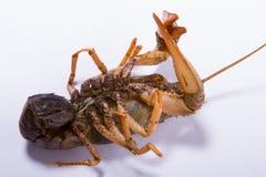 Crayfish isolated on white Stock Photos