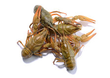 Crayfish isolated on the white background Royalty Free Stock Images