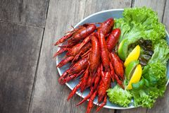 Crayfish, lobster with beer on a wooden table in a rustic style royalty free stock photo