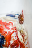 Crayfish Stock Photo