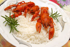 Crayfish meal Stock Image