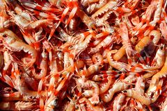 Crayfish Nephrops Norvegicus seafood market Royalty Free Stock Photos
