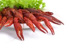 Crayfish party stock image