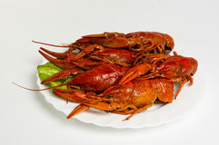 Crayfish on the plate Stock Image