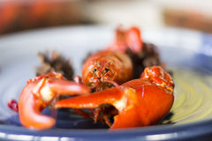 Crayfish on a plate with selective blur Stock Photo