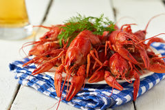 Crayfish. Red boiled crayfish and beer Royalty Free Stock Photo