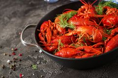 Crayfish. Red boiled crawfishes on table in rustic style, closeup. Lobster closeup. Border design royalty free stock images