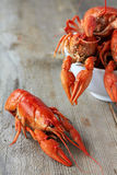 Crayfish. Red boiled crayfish on the wooden table Stock Photos