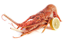 Crayfish Royalty Free Stock Photography