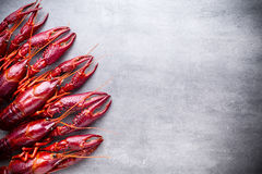 Crayfish. Royalty Free Stock Image