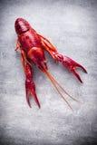 Crayfish. Royalty Free Stock Image