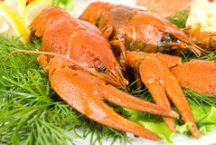 Crayfish in salad Royalty Free Stock Photography