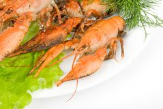 Crayfish in salad Royalty Free Stock Image