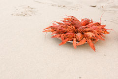 Crayfish on sand Stock Photo