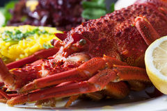 Crayfish served with rise and lettuce Stock Images