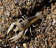 Crayfish on Shore Stock Photos