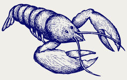 Crayfish sketch. Doodle style Stock Image