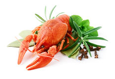 Crayfish and spices. Isolated over white Stock Image