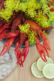 Crayfish and sprigs of dill Royalty Free Stock Images