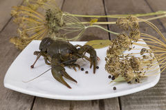 Crayfish on the square plate Stock Images