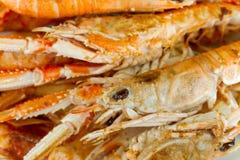 crayfish talerz obrazy royalty free