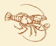 Crayfish. Vector drawing Royalty Free Stock Image