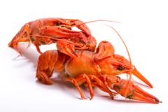 Crayfish on a white background. Stock Photos