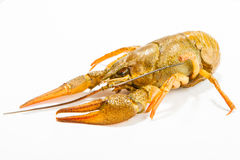 Crayfish on a white background. Crayfish isolated on white Royalty Free Stock Images