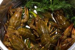 Crayfish Stock Photos