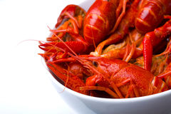 Crayfish in white bowl. Closeup on boiled crawfish in a white bowl royalty free stock image