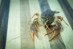 Crayfish on the wood background Stock Photo