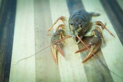 Crayfish on the wood background Stock Photos