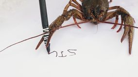 Crayfish write the word STOP. Crayfish holds a black marker in the claws, clumsy handwriting writes the word STOP on a white sheet of paper. Message from animals stock footage