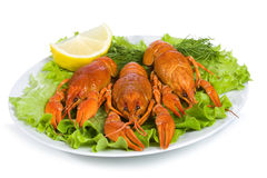 Crayfishes Stock Photos