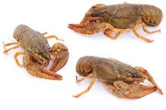 crayfishes Стоковое Изображение RF