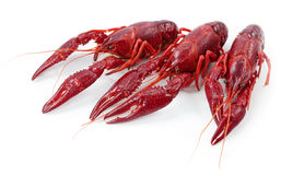 Crayfishes Royalty Free Stock Photos