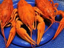 Crayfishes Стоковая Фотография RF