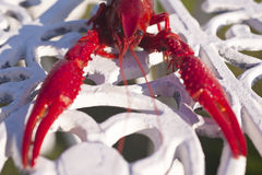 Crayfishes Стоковое Фото