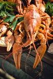 crayfishes Стоковые Изображения RF