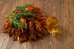 Crayfishes  with beer and dill Stock Images