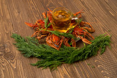 Crayfishes with beer and dill Royalty Free Stock Photos