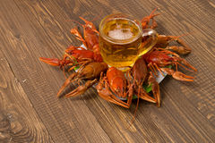 Crayfishes and beer mug on the plate Stock Photos