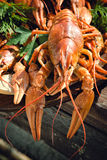 Crayfishes Royalty Free Stock Images