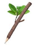 Crayon en bois à l'arrière-plan blanc Image stock