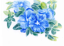 Crayon illustration,a bunch of Blue flowers. On paper Stock Images