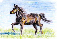 Crayon illustration,Horses on the prairie Royalty Free Stock Images