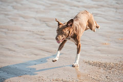 Crazy beach dog Stock Photo