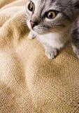 Crazy cat Stock Image